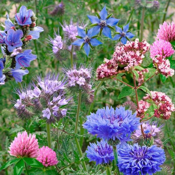 seedbom flowers