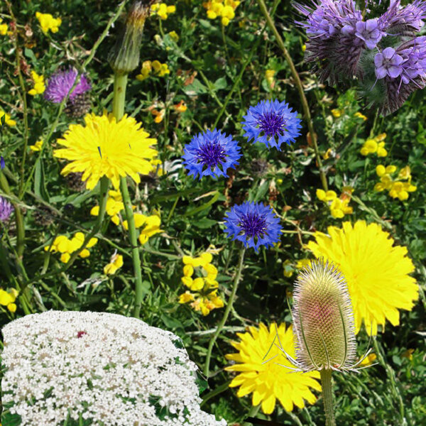 wild flowers by seedbom